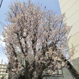 5月1日 札幌市中央区