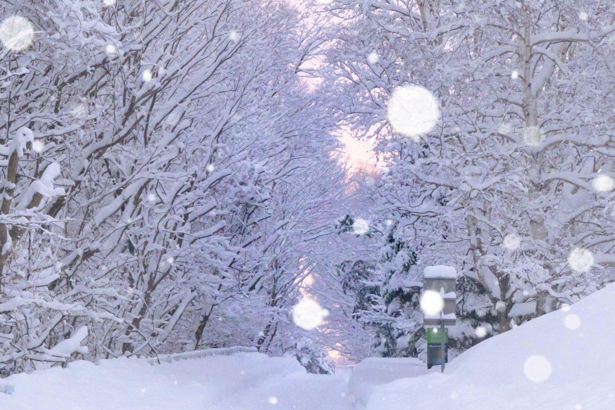 2月25日 札幌市厚別区 サイクリングロード