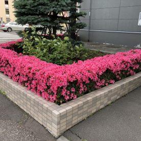 7月4日 札幌市中央区