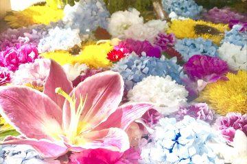 7月26日 札幌市豊平区 豊平神社