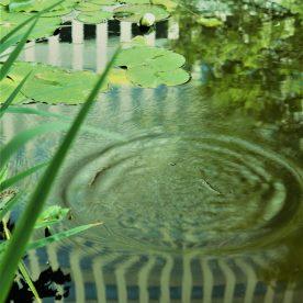 7月3日 札幌市中央区 道庁の池